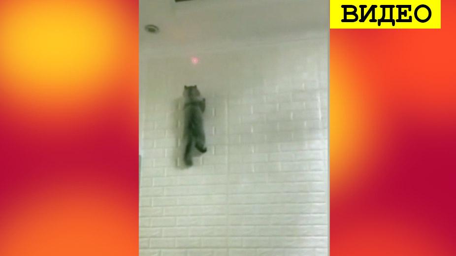 Видео с кошкой-«скалолазом» стало хитом фото