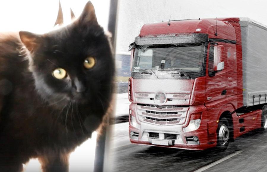 Смоленская кошка дальнобоийщица фото