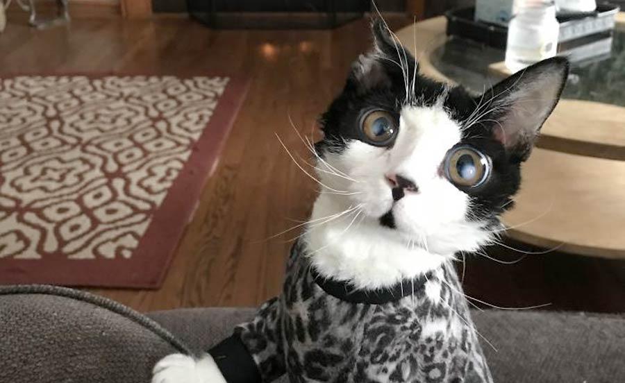 Кошка с огромными «стеклянными» глазами из-за редкого синдрома фото