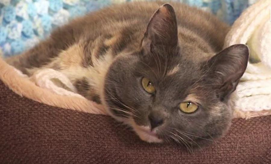 Конец скитаниям: самая толстая кошка Британии обрела дом фото