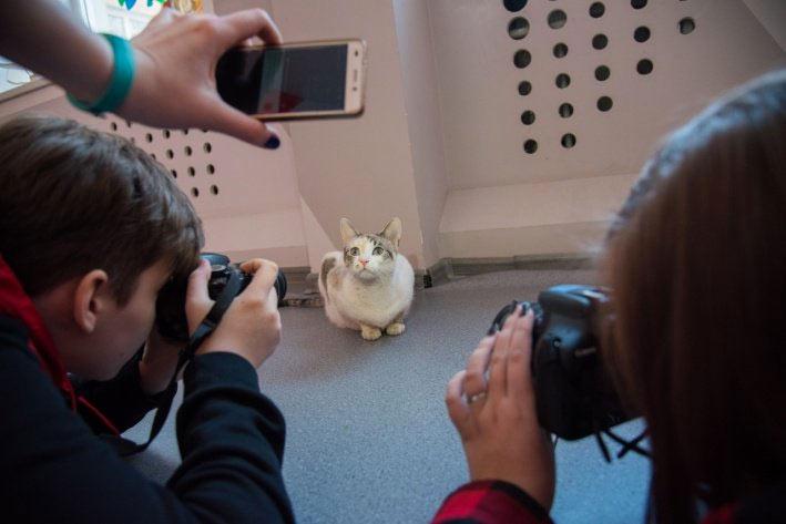 Бездомная кошка пришла в фотостудию и стала моделью, у нее даже есть «зарплата» фото