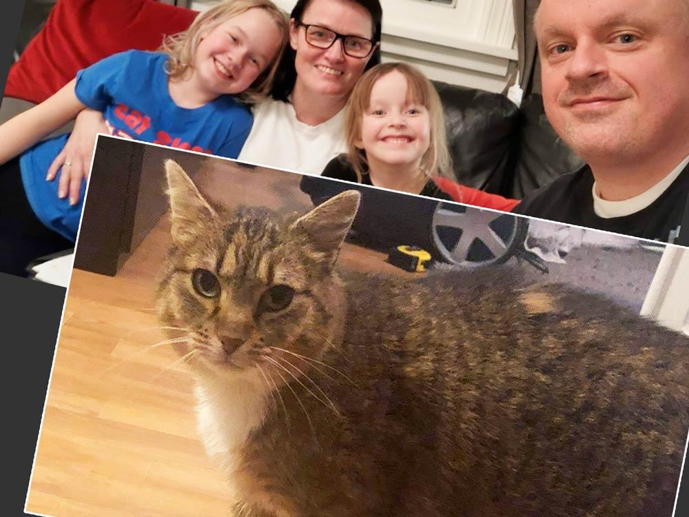Кошка вернулась к своим хозяевам спустя 8 лет фото
