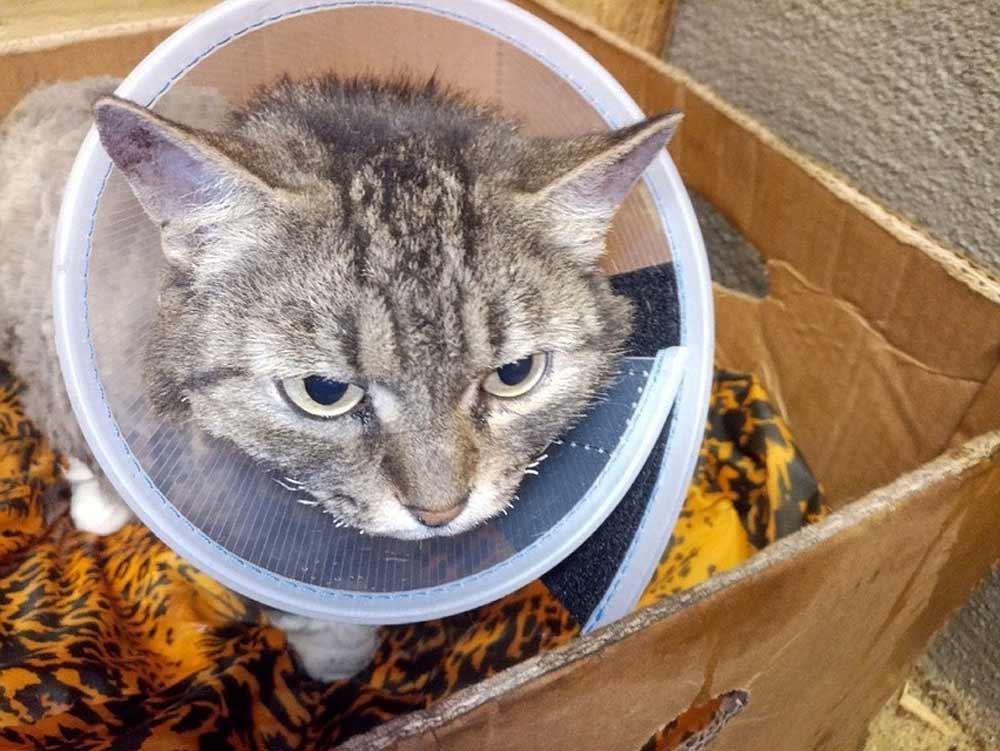 Беременная кошка по кличке Феня спаслась из горящей печи фото