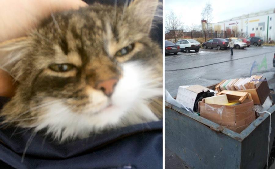 Инцидент в Мурманске: кошку посадили в сумку и выкинули на помойку фото