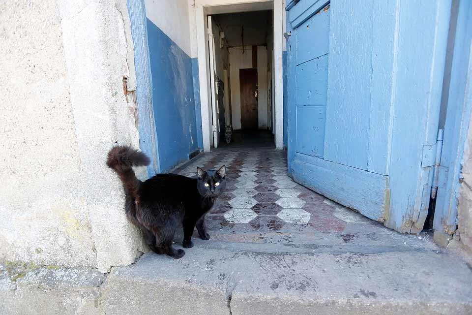 В Астрахани кошка стала причиной драки двух семей фото
