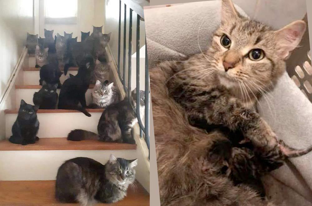 В доме женщины было обнаружено 120 кошек фото