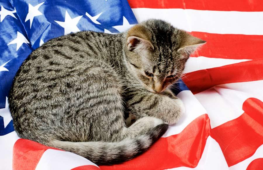 Взять из приюта кошку в США сложнее, чем ребенка из детдома в России фото