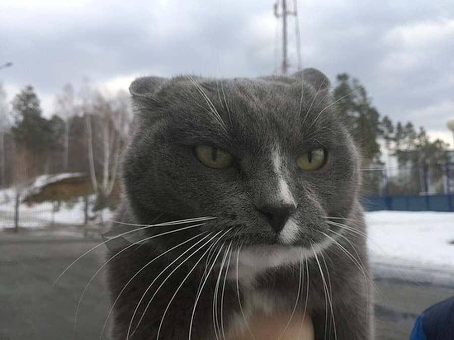 В Озёрске кошка Маруся каждое утро провожает хозяина в школу фото