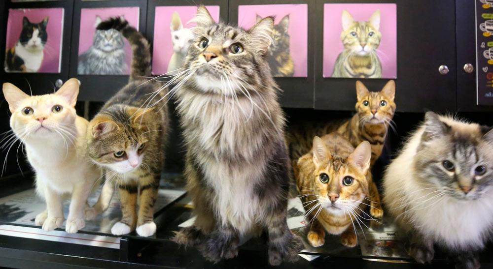 Японские учёные доказали, что кошки способны реагироват на своё имя фото