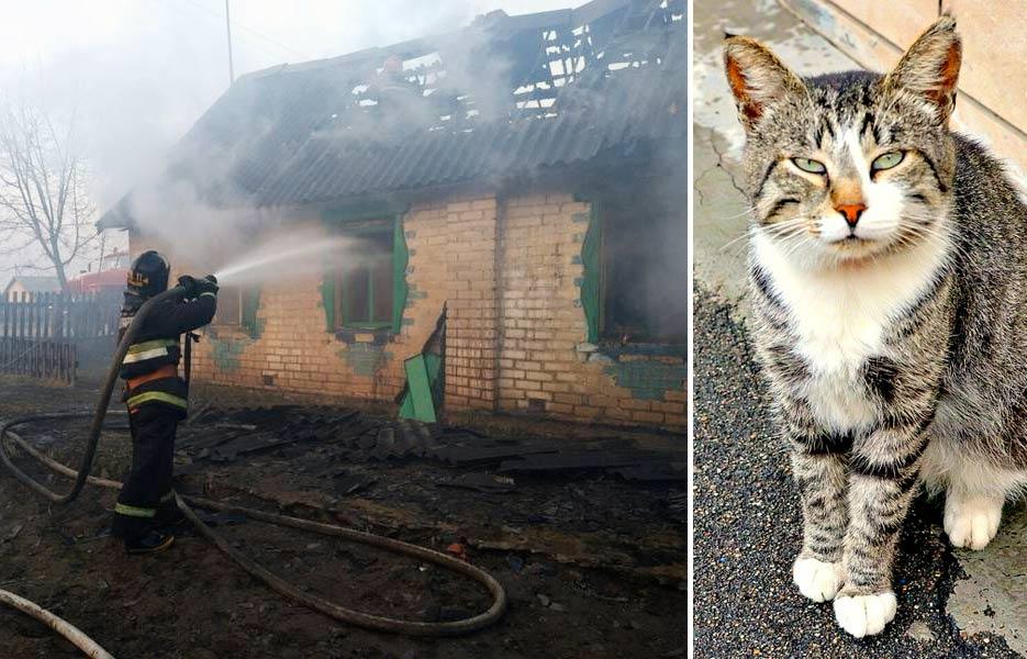В Белоруссии кот спас женщину от смерти фото