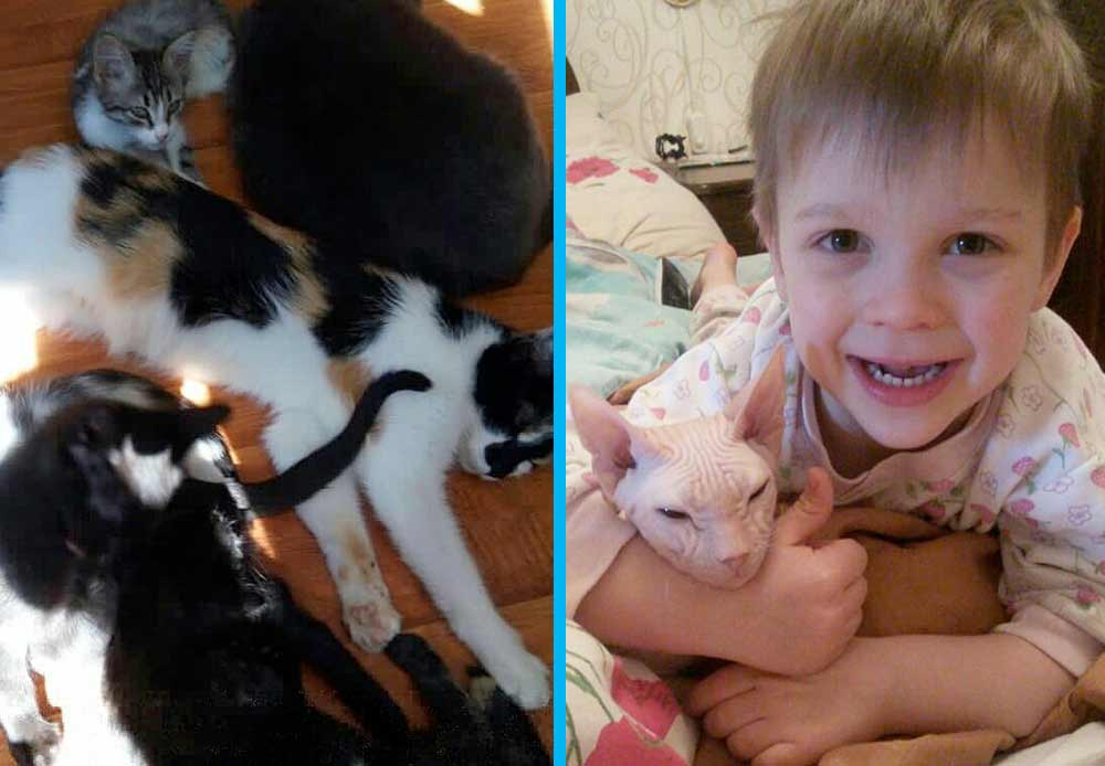 6-летний мальчик и его папа спасли уже больше 100 кошек фото