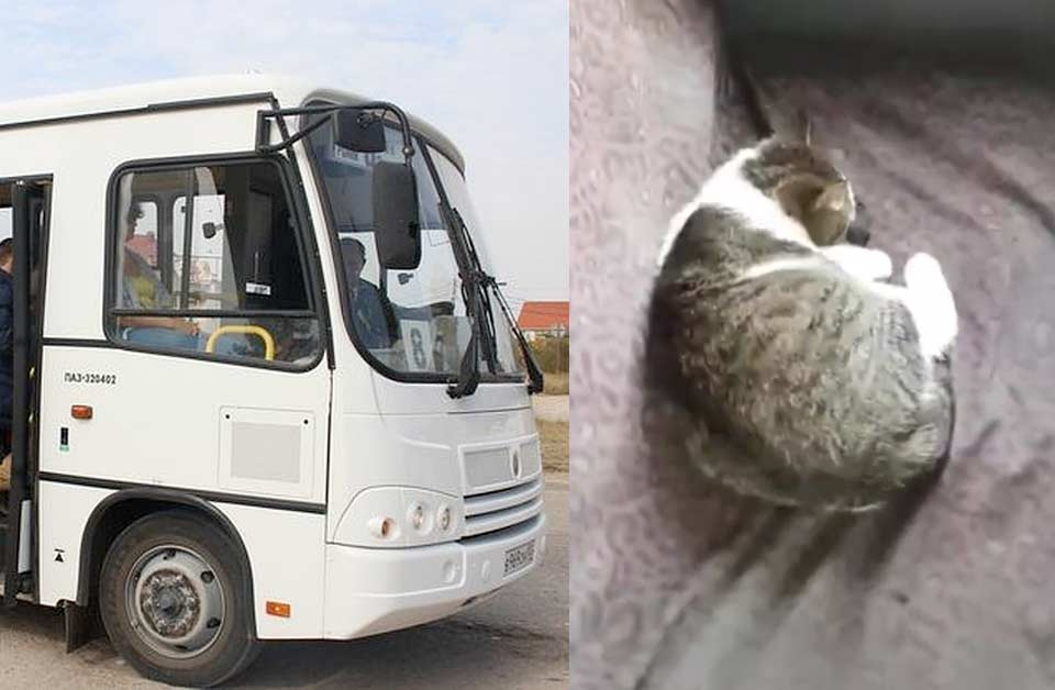 В Керчи кошка родила котят прямо в маршрутке фото