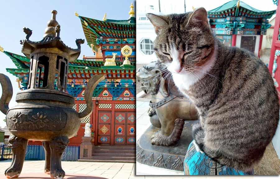 Кошка из Иволгинского дацана стала звездой соцсетей фото