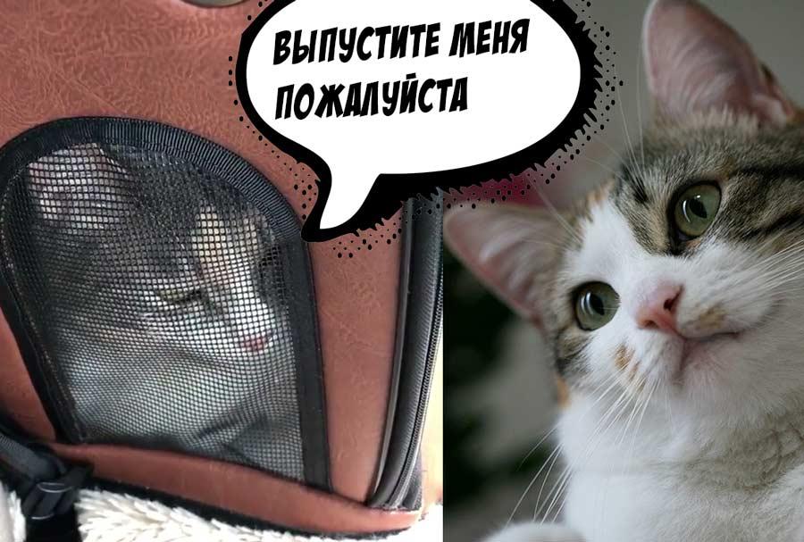 Кот увидел ветеринара и заговорил на человеческом языке фото
