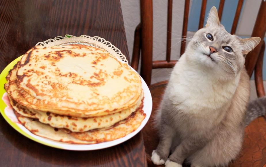 Кот-мем « Блинчик» стал звездой соцсетей, благодаря любимым блинам фото