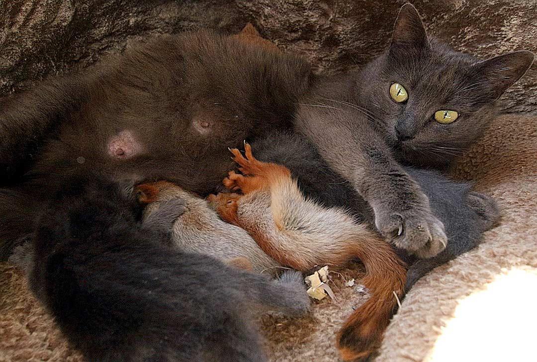 В Бахчисарае кошка стала матерью для трех бельчат-сироток фото