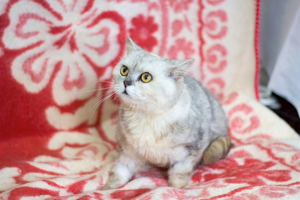 Волонтёры из Пензы ищут дом для удивительной кошки фото