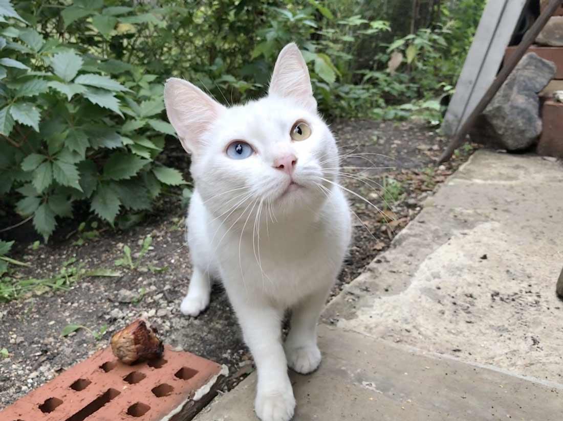 Из Краснотурьинского музея сбежала кошка стоимостью полмиллиона рублей фото