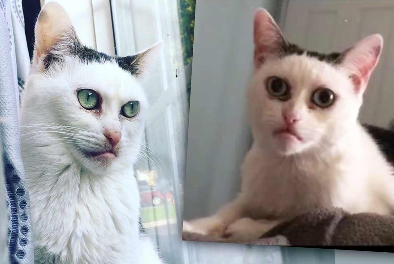 Кошка с человеческим лицом стала звездой соцсетей фото