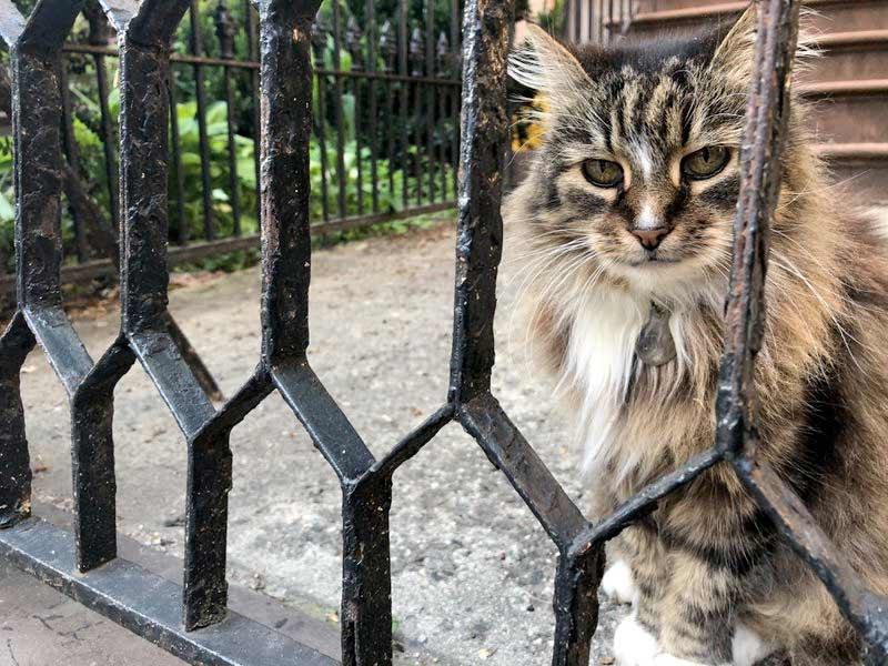 Кошка-эмигрант из Беларуси стала звездой в Нью-Йорке фото