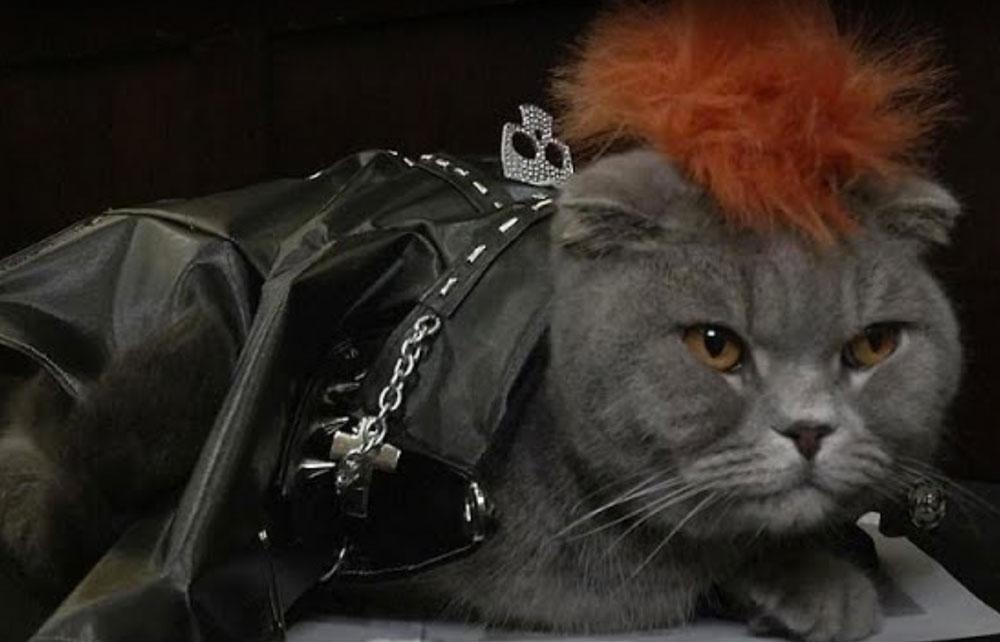 Кошки прошлись по подиуму в Нью-Йорке фото