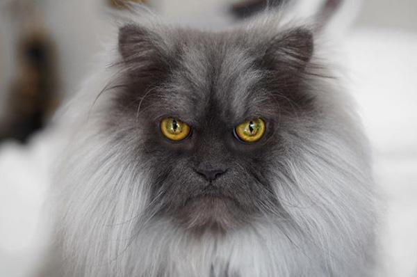 Хмурый кот Джуно стал новой звездой соцсетей фото