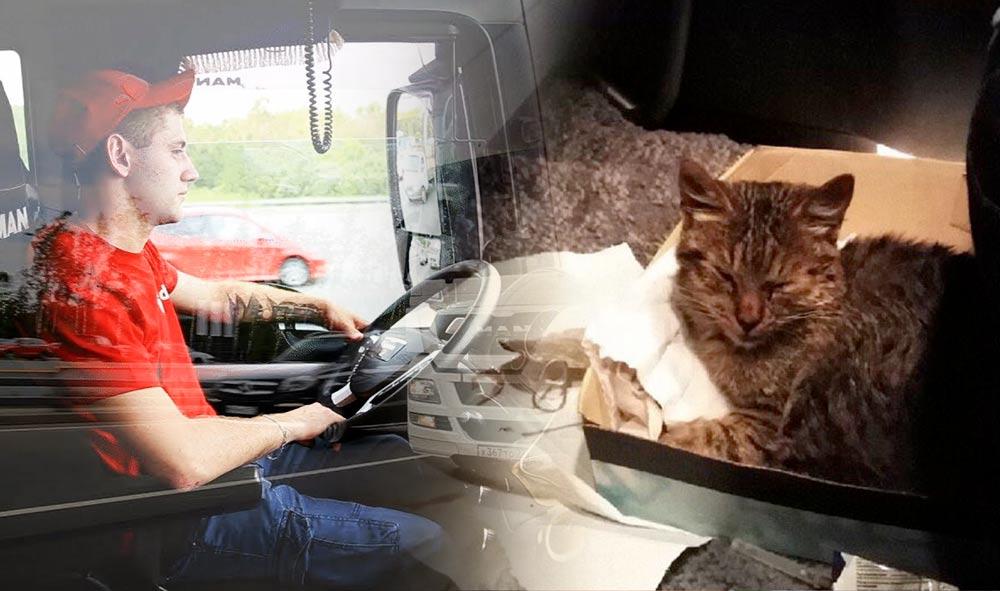 Ради спасения котенка водитель-дальнобойщик проехал 17 часов без остановок фото