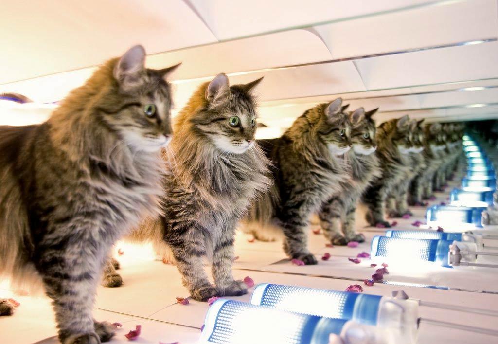Китайская компания запускает услугу по клонированию кошек фото