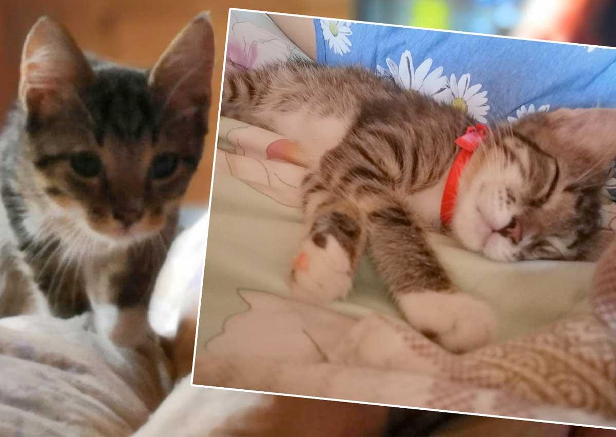 Через 40 дней после смерти отца за парнем увязался котенок. Котенок провел его до квартиры, а потом вбежал внутрь фото
