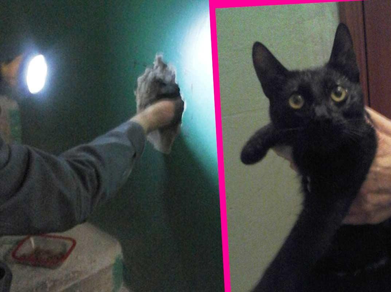 В Крыму кошка пять дней просидела в вентиляционной шахте жилого дома фото