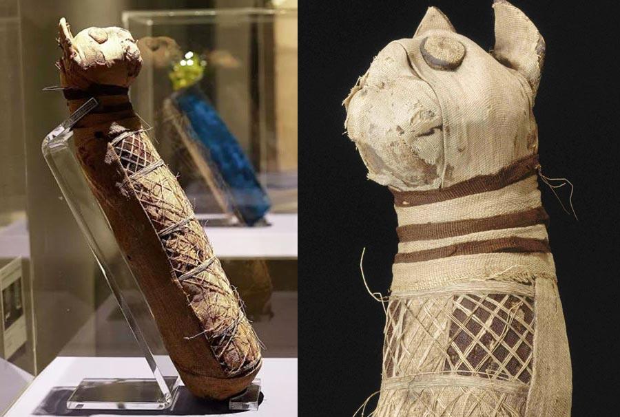 Ученые рассказали, что находится внутри древнеегипетской мумии кошки фото