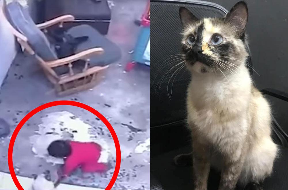 Кошка спасла малыша, чуть не упавшего с лестницы фото