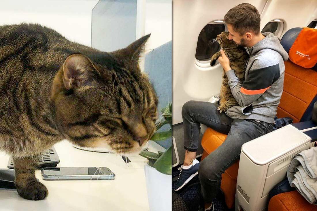 Пассажира не пустили в самолет в Шереметьево с толстым котом фото