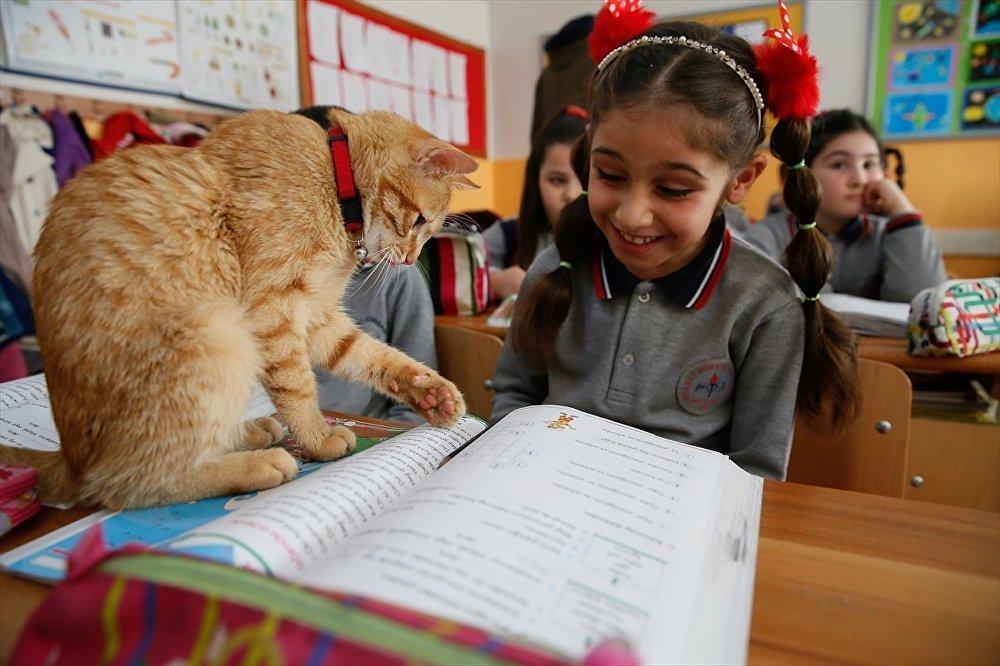 В одной из школ Турции на урок пришел котенок и остался там навсегда фото