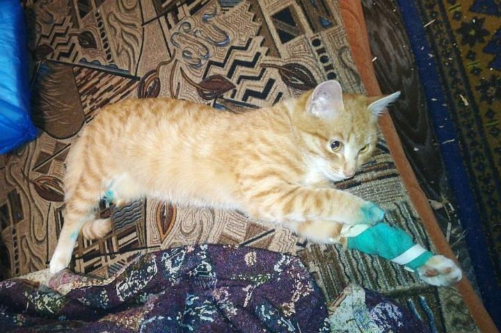 Умная кошка догадалось привести человека на место трагедии, а тот отвез раненного к ветеринару фото