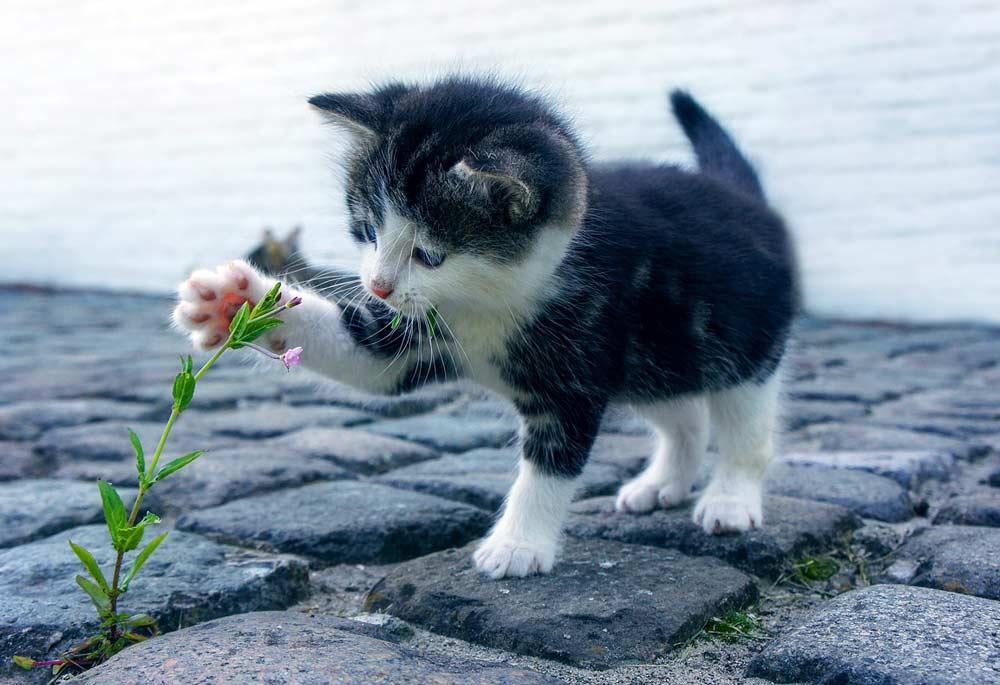 В результате опроса ВЦИОМ выяснилось: россияне чаще заводят кошек чем собак фото