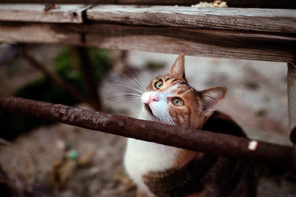 Правительство России обязало открыть подвалы домов для животных фото