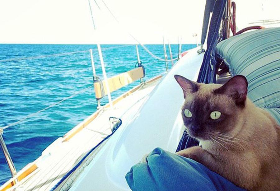 Кошка-мореход покорила соцсети фотографиями своих приключений фото