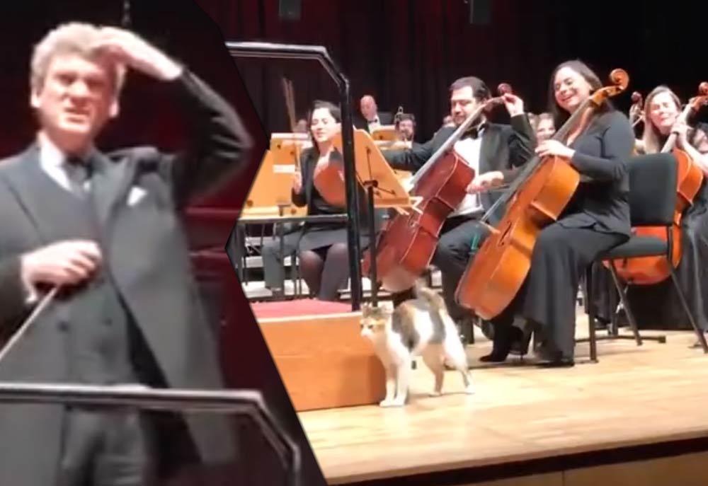 Бездомная кошка затмила музыкантов симфонического оркестра фото