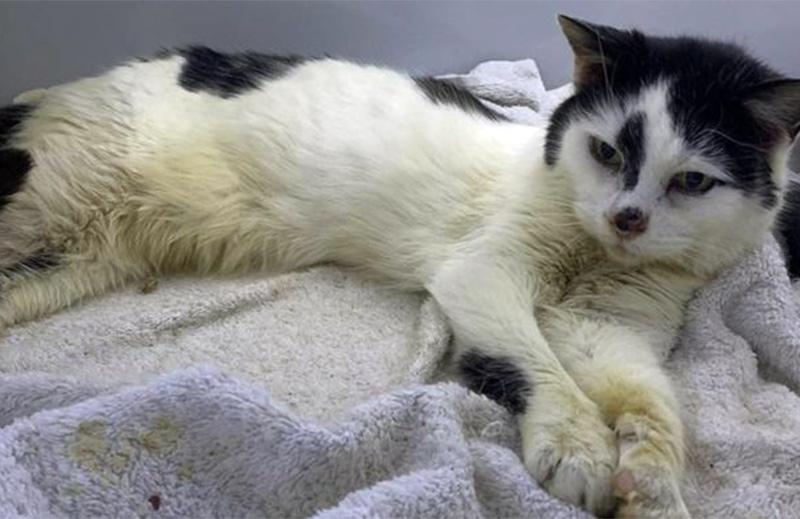 После 11 лет скитаний по помойкам кошка вернулась домой фото