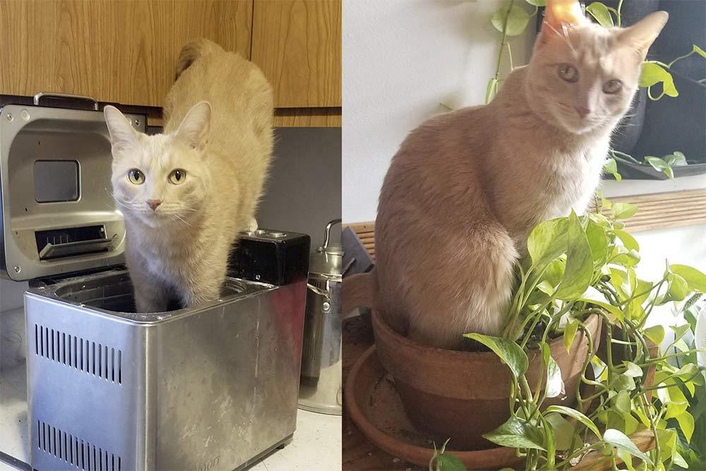«Хожу где хочу»: любящий нарушать правила кот прославился на весь мир фото