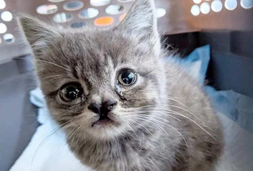 Уличный котёнок с неровными глазами получает второй шанс фото