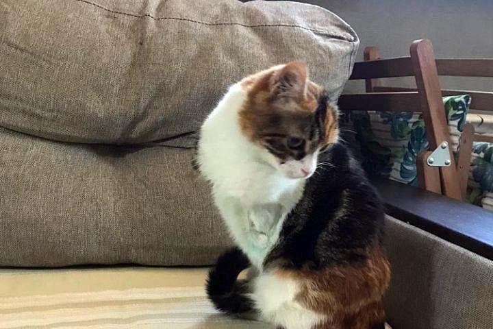 В Сочи безногая кошка обрела семью фото
