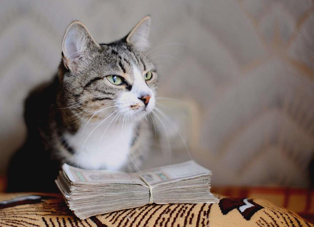 Любопытный кот сделал женщину миллионершей. Он не был породистым, а просто знал, где лежат деньги фото