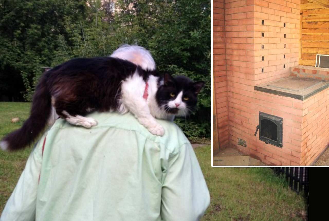 Наш кот Тимофей и кошка Лина спасли нас от пожара фото