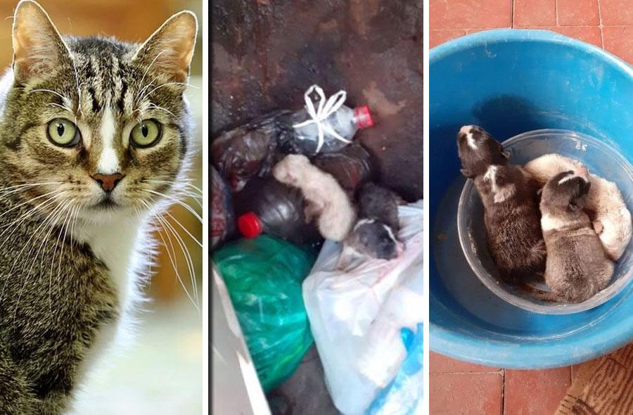 Костромская кошка усыновила выброшенных в мусорку щенков фото