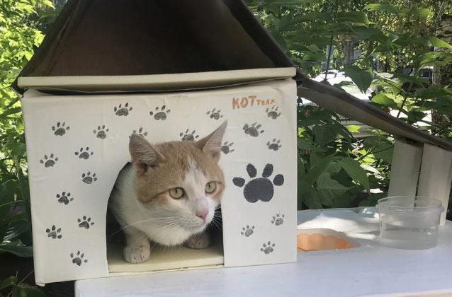 Специальные домики для бездомных кошек построят в Нижнем Новгороде фото
