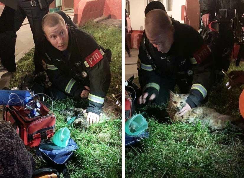 На северо-западе Москвы спасатели откачали кошку фото