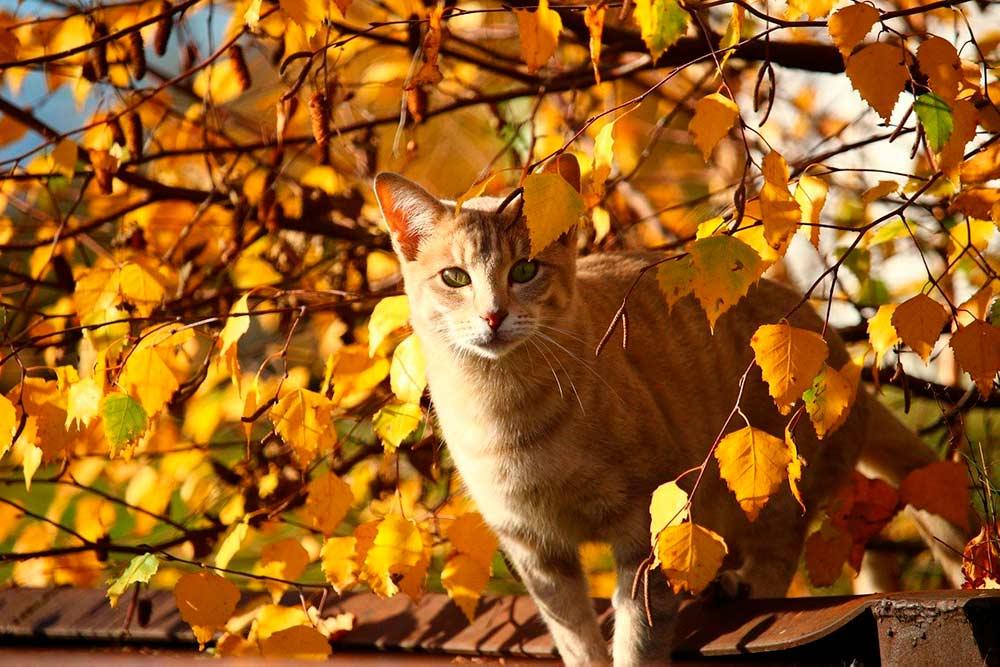 Осенью психологи советуют почаще общаться с кошками фото
