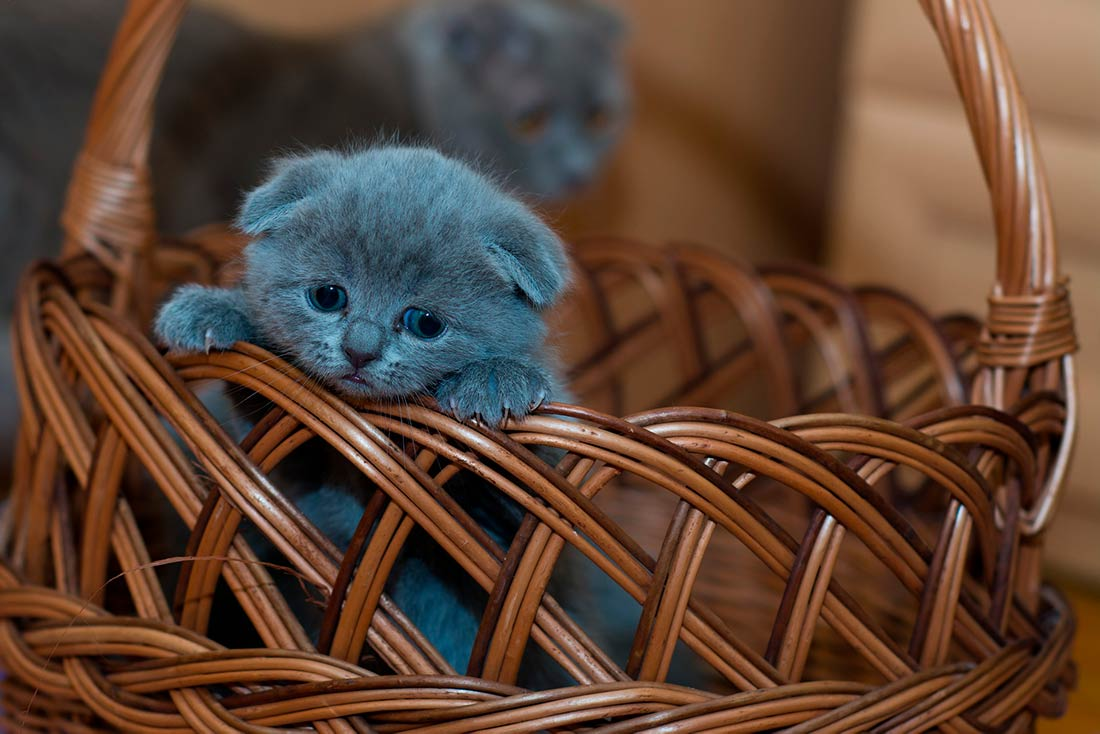 Москвич скупает котят на корм своему домашнему питону фото